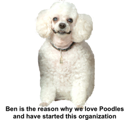 Toy Poodle Rescue Events